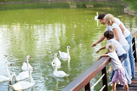 Families with children feeding white swans photo