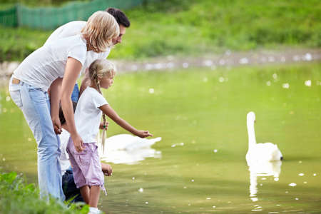 Families with children feeding swans at the lake photo