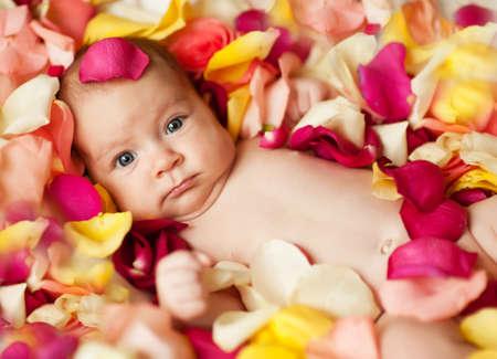 demografia: Recién nacido adorable en pétalos de rosa Foto de archivo