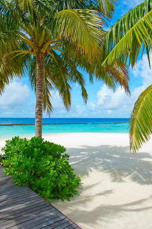 Fantastic peaceful view on innocent nature of paradise island with turquoise ocean,palms and sky