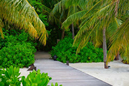 Scenic road to jungle on tropical island Stock Photo
