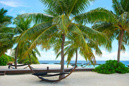 Fantastic peaceful view on innocent nature of paradise island with turquoise ocean,palms, hammock and sky