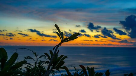 Beautiful view of the sky at sunset behind a tree on the beach from a cliff