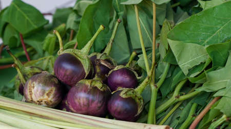 Close up of small eggplants