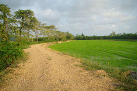 trail beside the rice field photo