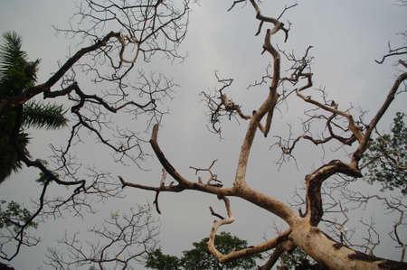 arboles secos: �rboles muertos en el cielo