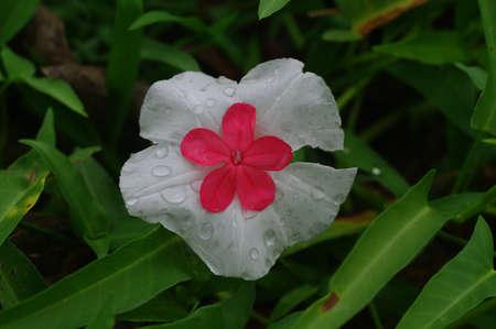 lovely flower Stock Photo - 18516365
