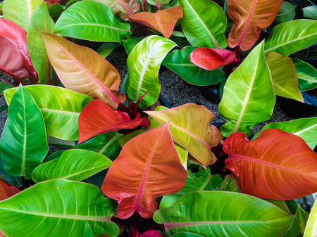 colorful leaves photo