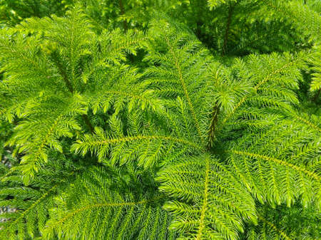 ligt green tree photo