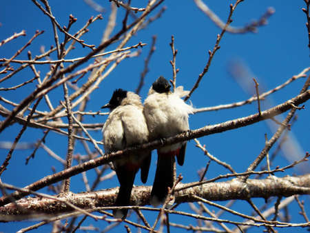 doublet: couple bird on branch