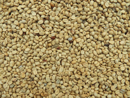 raw coffee bean photo