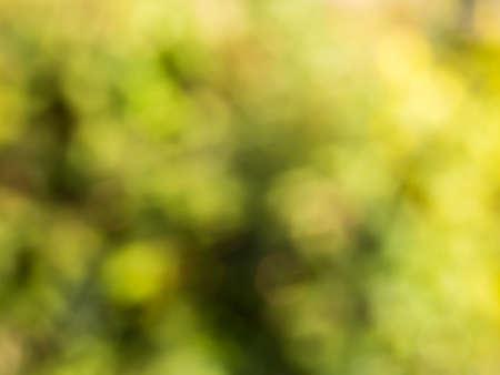 vague: Blur image , nature color