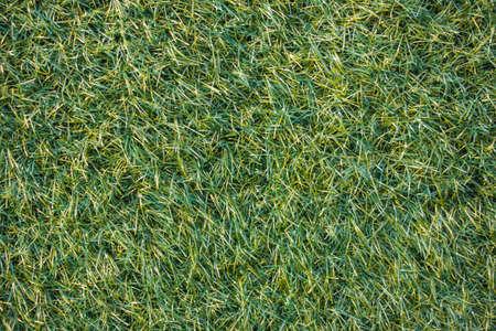 synthetic fiber: Artificial grass texture