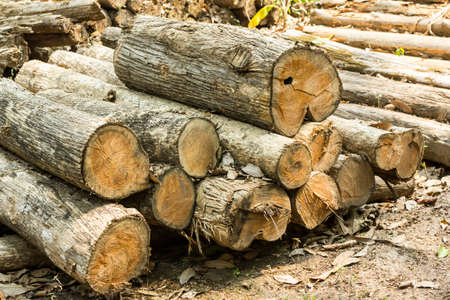 deforestacion: deforestaci�n  Foto de archivo