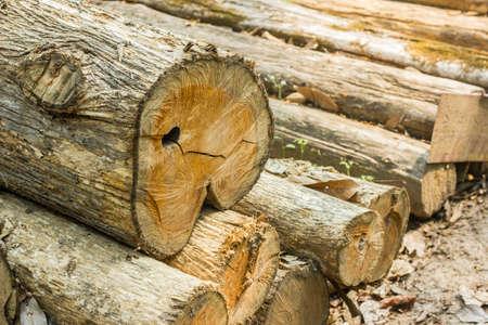 deforestacion: deforestación  Foto de archivo