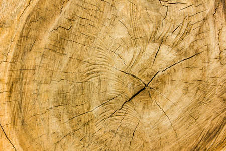 heartwood: wooden texture , heartwood