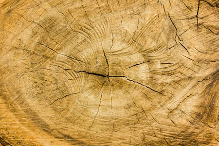duramen: textura de madera, duramen Foto de archivo