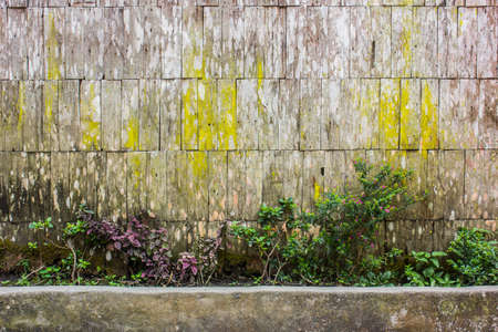 shrubbery: shrubbery and wooden wall , home decoration
