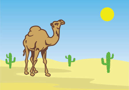 nomadic: Camel in desert among cactuses Illustration
