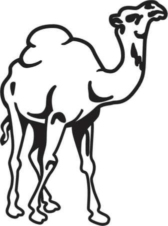 Camel geïsoleerd op wit