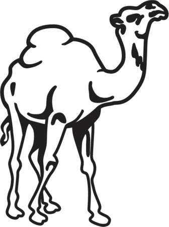 hump: Camel isolato su bianco