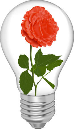 Red rose in a bulb on a white background