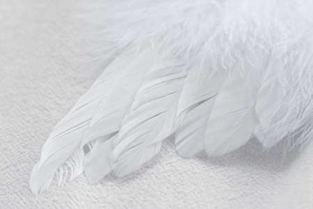 heavenly angel: Macro shot of a soft, fluffy, white feather wing on a white fabric background. Stock Photo