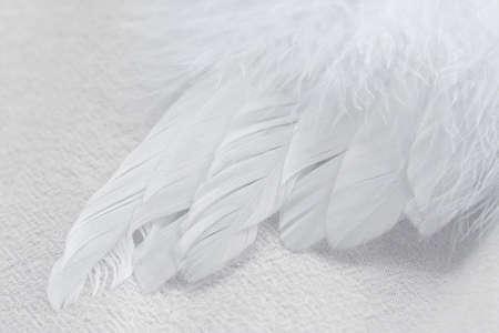 Photo macro d'un moelleux aile douce, plume blanche sur un fond de tissu blanc.