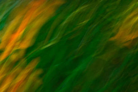 Abstract blur created by moving camera while shutter was open, creating graceful, flame-like qualities of orange, yellow and green
