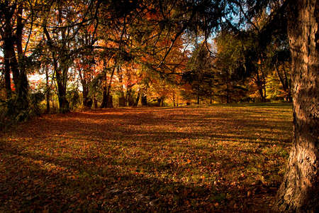 grassy park area in Pennsylvania, surrounded by trees with colorful leaves in October.