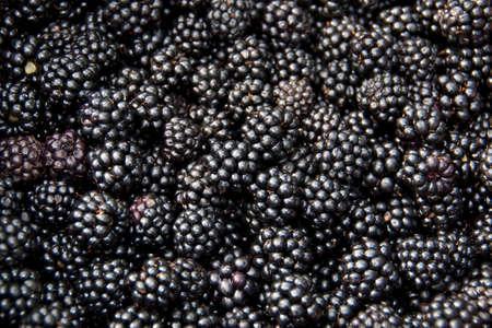 blackberries: Blackberries  Stock Photo