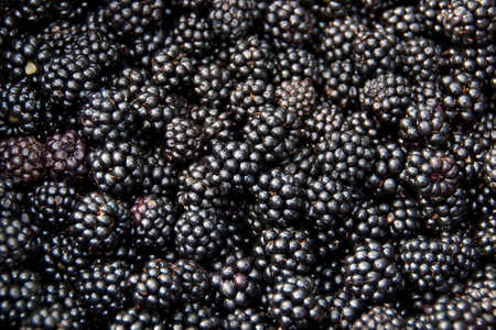 Blackberries  Stockfoto