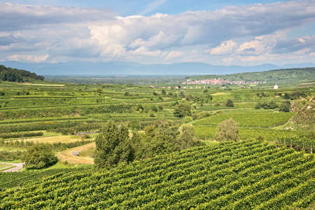 wineyard: Vineyard landscape in Kaiserstuhl, Germany Stock Photo