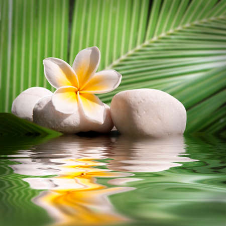 tropical flowers: Plumeria and white stones, water reflections