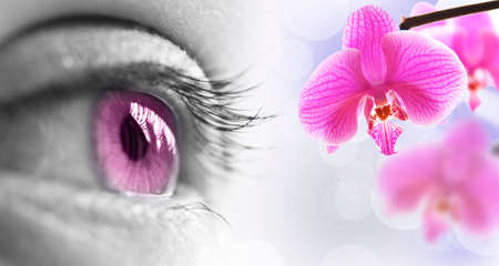 eye close up: Close up of a pink eye and orchid flower