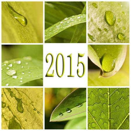 2015, green leaves and raindrops photo collage photo
