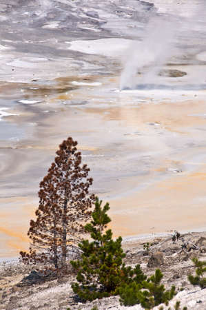 Norris Geyser Basin, Yellowstone National Park USA 版權商用圖片