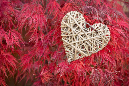 Wooden heart on red maple leaves background photo