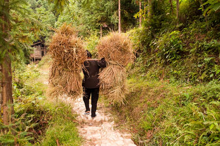 loads: Woman carrying heavy loads of rice straw after harvest, Guangxi, China