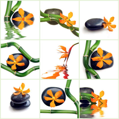 lucky bamboo: Lucky bamboo, black stone and orange orchid collage