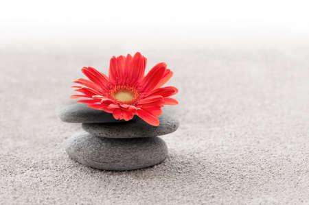Jardin de sable zen avec fleur rouge de gerbera Banque d'images