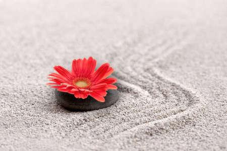 Zen sand garden with red gerbera flower