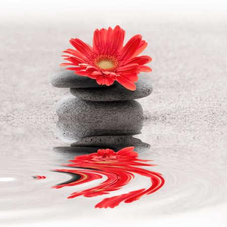 Zen sand garden whith red gerbera flower photo