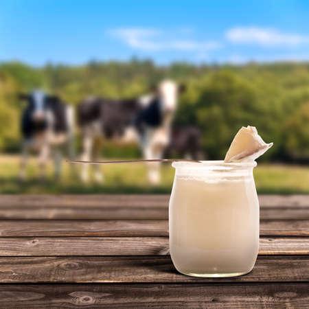 yogurt natural: Yogur natural, vacas en el fondo