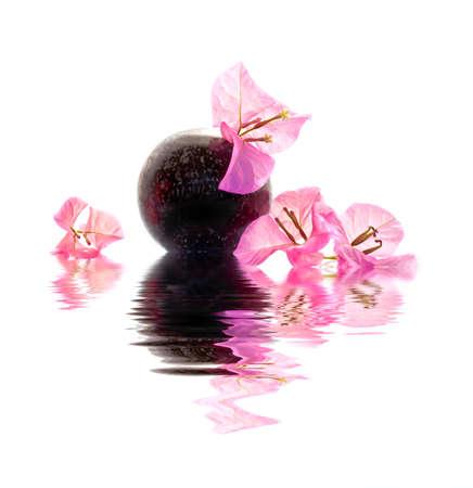 bougainvillea: Bougainvillea pink flower in a vase on white background