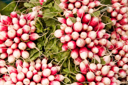 Bunches of radishes background photo