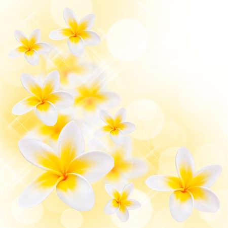plumerias: Frangipani flowers composition Stock Photo