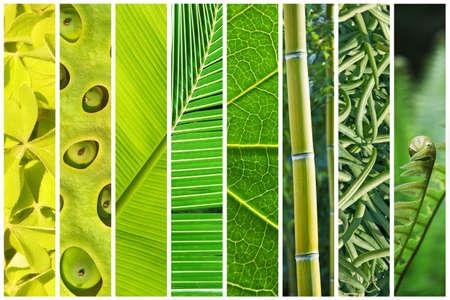 vegetal: Vegetal green gradation collage