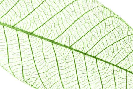 Transparent leaf background