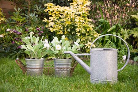 regar las plantas: Regadera y flores en un jardín